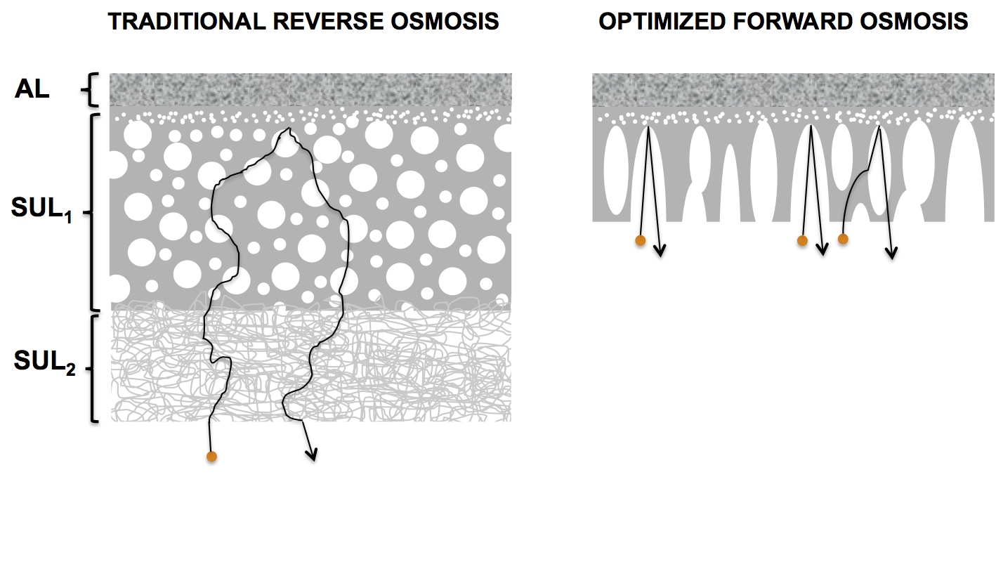 Schematic diagram of the membrane structures of reverse osmosis and forward osmosis membranes