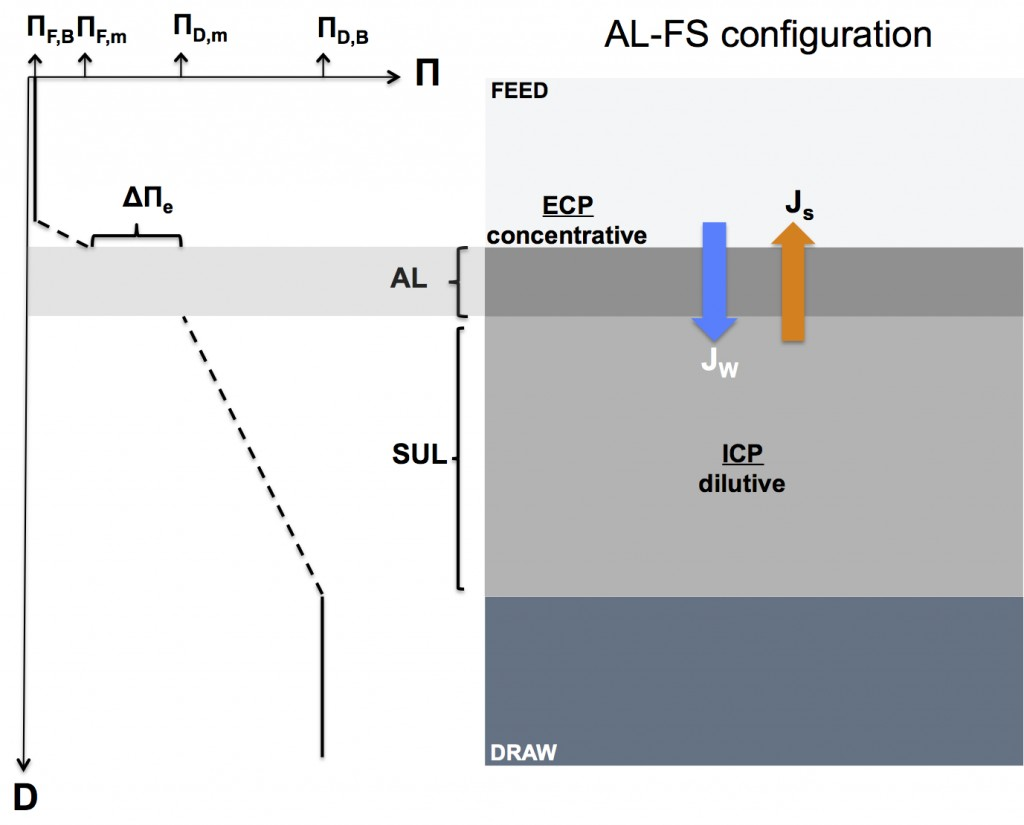 Schematic diagram illustrating concentration polarization in a forward osmosis membrane