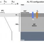 Schematic diagram illustrating concentration polarization in a forward osmosis membrane