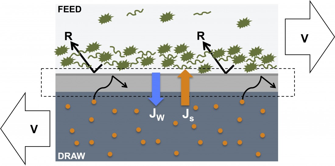 Membrane fouling in forward osmosis processes