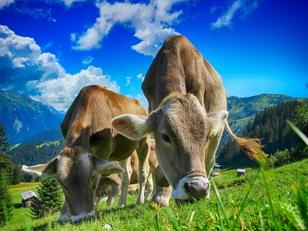 Forward osmosis in the dairy industry